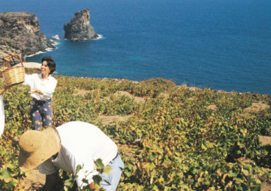 Passito di Pantelleria: Liquid Amber, Born of the Wind