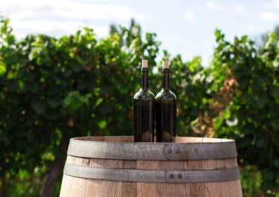 Michael Diacono's Choice of Donnafugata Wines